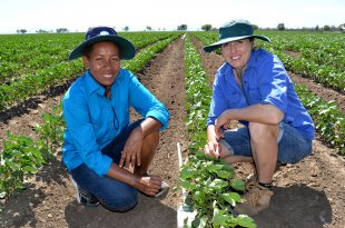 Skilled Migrant Ellen Iramu and Sandra Williams, who is the Team Leader, Agriculture & Food, CSIRO based at the Australian Cotton Research Institute, Narrabri.